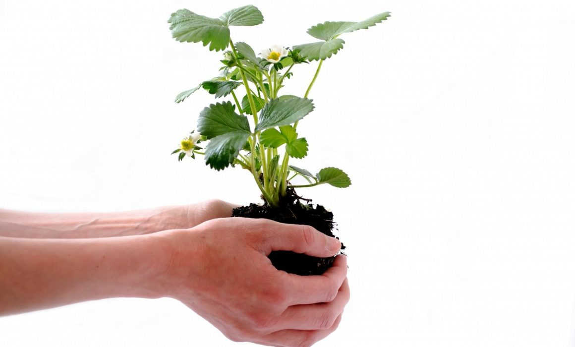 """""""Planting for the Future"""" Tips on Socially Responsible Investing - Economics Global"""