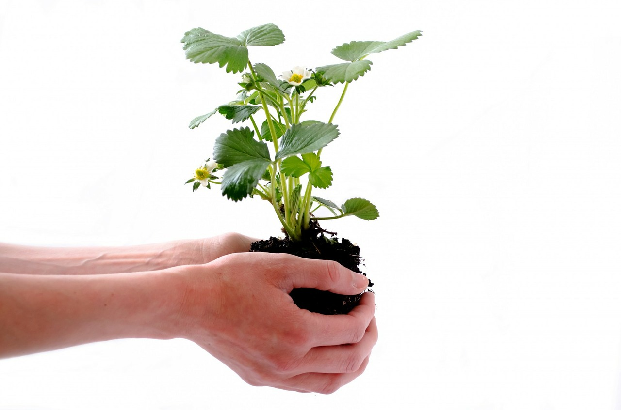 """Planting for the Future"" Tips on Socially Responsible Investing - Economics Global"